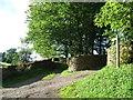 NY7204 : Bridlepath to Garshill by David Brown