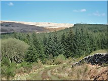 NX5362 : Track leading into the Clints of Dromore Estate by Ann Cook