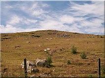 SH3033 : Sheep on Carneddol hill by Eric Jones