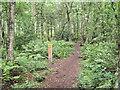 SJ7964 : Path marker by Jonathan Kington