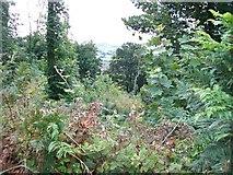 SH3137 : Coed Bryn Hendre woodland by Eric Jones