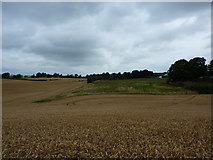 SK3875 : Barley fields, Old Whittington by Peter Barr