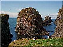 HZ1970 : Puffins on the cliffs by The Holms by Julian Paren