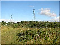 TG2407 : Green oasis west of the River Yare in Trowse by Evelyn Simak