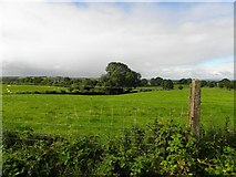 H5572 : Bracky Townland by Kenneth  Allen