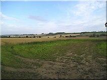 SE8067 : Farmland east of Langton by JThomas