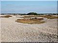 TR0720 : Shingle Beach by Oast House Archive