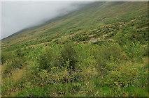 NT1512 : Growing trees in Carrifran Glen by Jim Barton