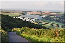 SS4939 : Cloched crops on Winsham Down by Roger A Smith