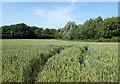 ST6060 : 2010 : Crop identification, wheatfield in June by Maurice Pullin