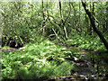 SJ7964 : Boggy woodland by Jonathan Kington