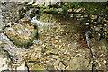 SX0789 : Tintagel: streambed by Martin Bodman