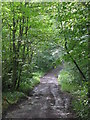 NY8362 : Track between Langley Castle and Elrington by Mike Quinn