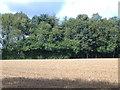 SE7566 : Farmland near Church Farm by JThomas