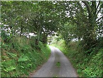 SH2332 : Bend of a tree lined section of the lane to Bryncroes by Eric Jones