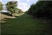 SK7528 : Old railway cutting by Kate Jewell