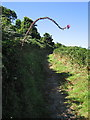 SN3557 : Ceredigion coast path climbing onto the cliff, Cwmtydu by Rudi Winter