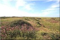 NZ5626 : Derelict land near Teesside Works, Redcar by Philip Barker