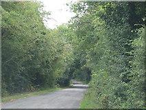 SO8534 : Road runs through trees to Bushley Green by Sarah Charlesworth