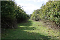 SK7528 : Old railway line by Kate Jewell