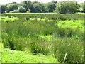 R6361 : Wet pasture near Illaunyregan by David Hawgood