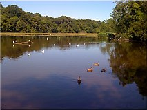 NS2209 : Swan Pond at Culzean Castle Country Park by Darrin Antrobus