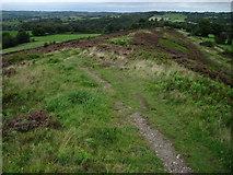 SJ9054 : Marshes Hill Common by Chris Wimbush