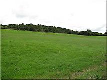 R6242 : Pasture near Grange by David Hawgood