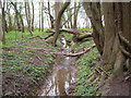 TM2090 : Stream through Crow Green by Linden Parker
