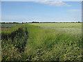 TF4904 : Fields off Molls Drove by Hugh Venables