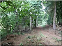 SP0626 : In Guiting Wood [5] by Michael Dibb