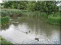 NZ3662 : Duck pond in nature reserve adjacent Tileshed Lane by Alex McGregor