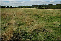 SP0147 : Rough meadowland, Wood Norton by Philip Halling