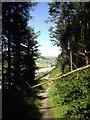 SN5983 : Woodland path near Clarach Bay by John Lord