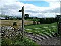 NY7514 : Fields near Warcop by David Brown