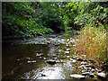 NZ4510 : River Leven through Scriddles Wood by Graham Scarborough