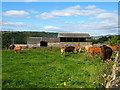SE1021 : Cattle at Exley Hall Farm by Stephen Craven