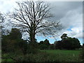 TF7022 : Dying tree, Roydon, Norfolk by Richard Humphrey