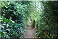 TQ4956 : Darent Valley Path by N Chadwick