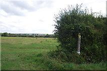 TQ5056 : Darent Valley Path waymarker by N Chadwick