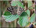 S6638 : Speckled Wood by kevin higgins