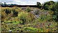J4973 : Former Castlereagh Park, Newtownards (1) by Albert Bridge
