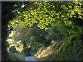 SX8850 : Drive near Kingswear by Derek Harper