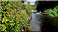 J4569 : The Enler River, Comber (2) by Albert Bridge