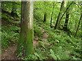 SO5308 : Offa's Dyke Path passes through Highbury Wood NNR by Jeremy Bolwell