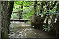 SS4938 : A bridge over the River Caen in Blackwell Wood viewed from up stream by Roger A Smith