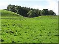 NY7163 : Farmland northeast of Owl Wood, Plenmeller by Mike Quinn