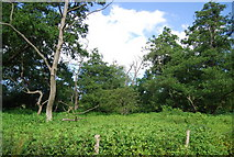 SU9946 : Wooded marshland by The Wey Navigation by N Chadwick