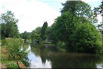 SU9947 : River Wey / Wey Navigation by N Chadwick