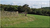 NZ1136 : Field beside Thornley Beck by Trevor Littlewood